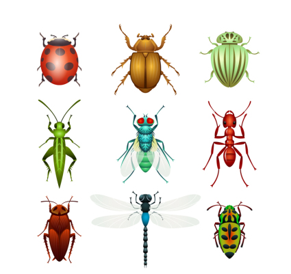 9 kinds of insect vector design material