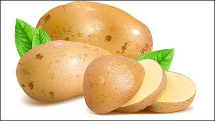 Fresh potatoes and slices vector material