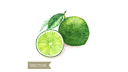 Water painting green lemons vector material
