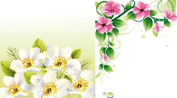 Vector flower borders \u0026amp; background
