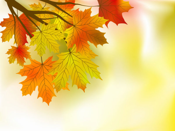 Beautiful Maple Leaf Background 01 - Vector