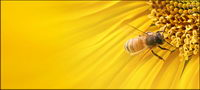 Sunflower picture background material-8