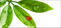 Floating plants and insects picture material-10