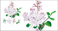 Chinese herbal medicine - Lilac original vector
