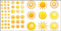 Variety of sunflowers patterns - Vector