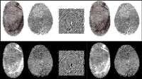 Fingerprint vector material -2