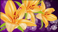 Yellow lily Vector -5