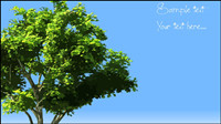 Trees vector material -2