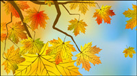 Beautiful maple leaf background 03 - vector