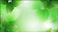 Beautiful green leaves vector material